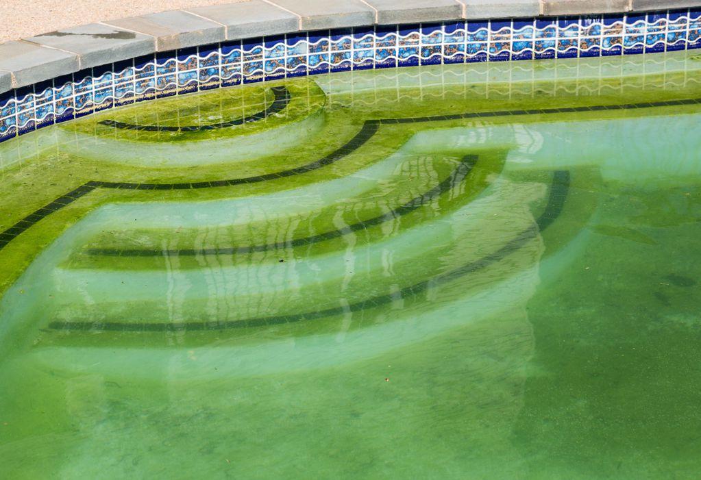 algues moutarde caract ristiques et traitement ooreka