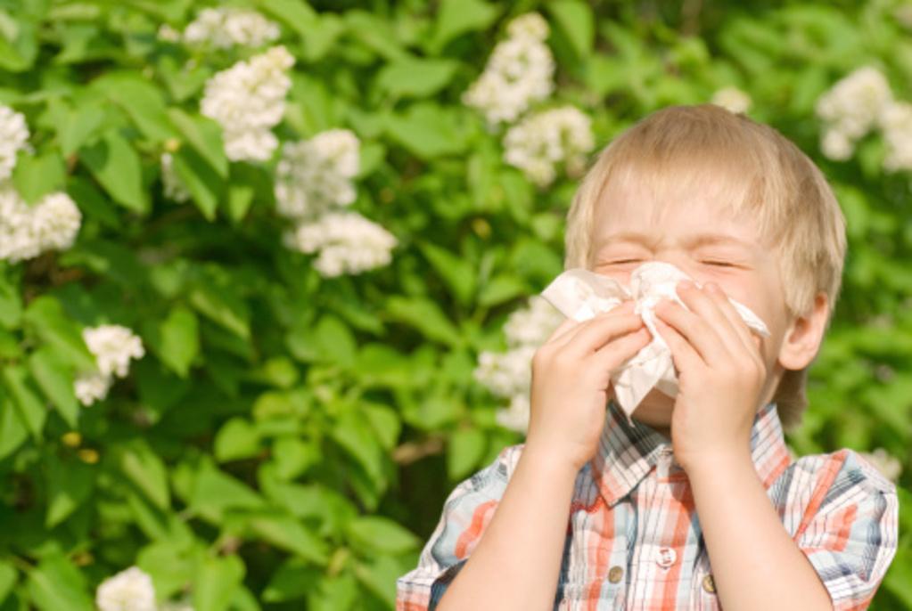 allergie aux gramin es sympt mes et traitement ooreka. Black Bedroom Furniture Sets. Home Design Ideas