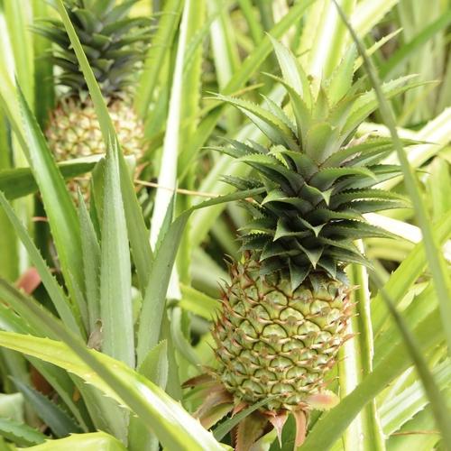 Plante pour v randa liste ooreka - Plantes exterieures plein soleil ...