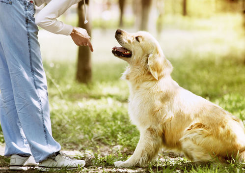 Apprentissage du chien : la communication