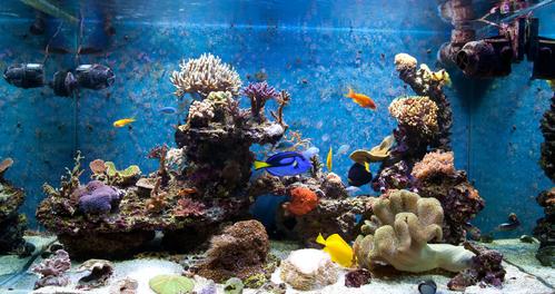 Aquarium eau de mer caract ristiques ooreka for Achat aquarium eau de mer