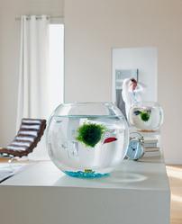 Pompe aquarium mod les et prix ooreka for Bulleur pour aquarium
