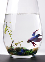 déco vase aquarium