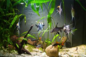 décoration aquarium eau froide