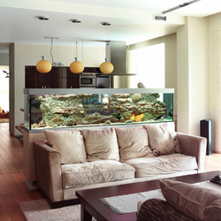 Amenagement aquarium