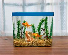 Sol aquarium