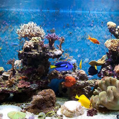 aquarium le sujet d crypt la loupe. Black Bedroom Furniture Sets. Home Design Ideas
