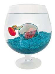 Petit aquarium conseils pour choisir son petit aquarium - Quel poisson choisir pour un petit aquarium ...