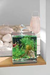 INSTALLATION AQUARIUM