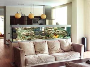 Plus qu'un simple loisir, aménager un aquarium représente souvent une véritable passion.