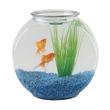 poisson combattant aquarium ses besoins ooreka. Black Bedroom Furniture Sets. Home Design Ideas