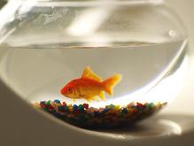 Equipement aquarium