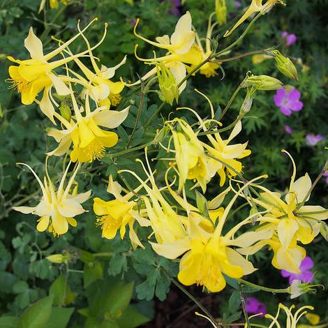 Fleur jaune liste ooreka - Fleur blanche longue tige ...