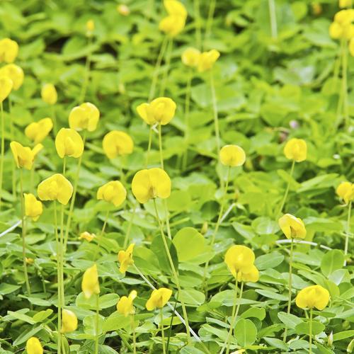 Plante fleurie d 39 ext rieur liste ooreka for Plante verte haute exterieur