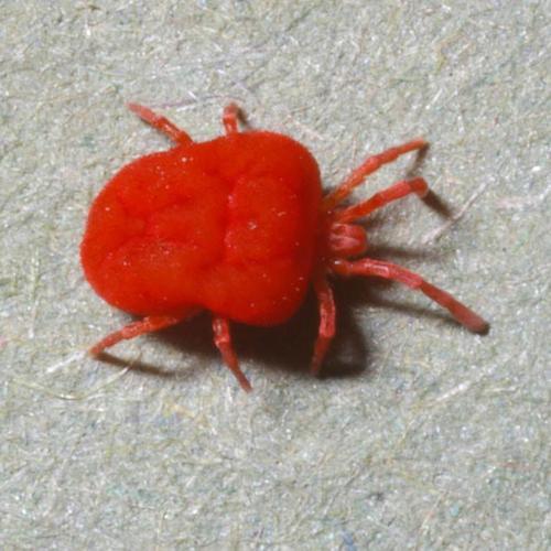 Lutter contre les araign es rouges jardinage - Plante contre l humidite dans la maison ...