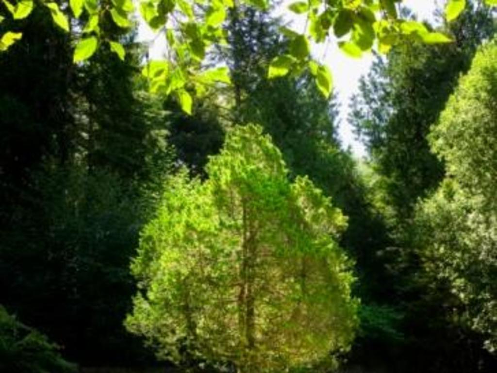 Lichen et mousse sur arbres fruitiers faut il l 39 enlever - Mousse sur les arbres ...