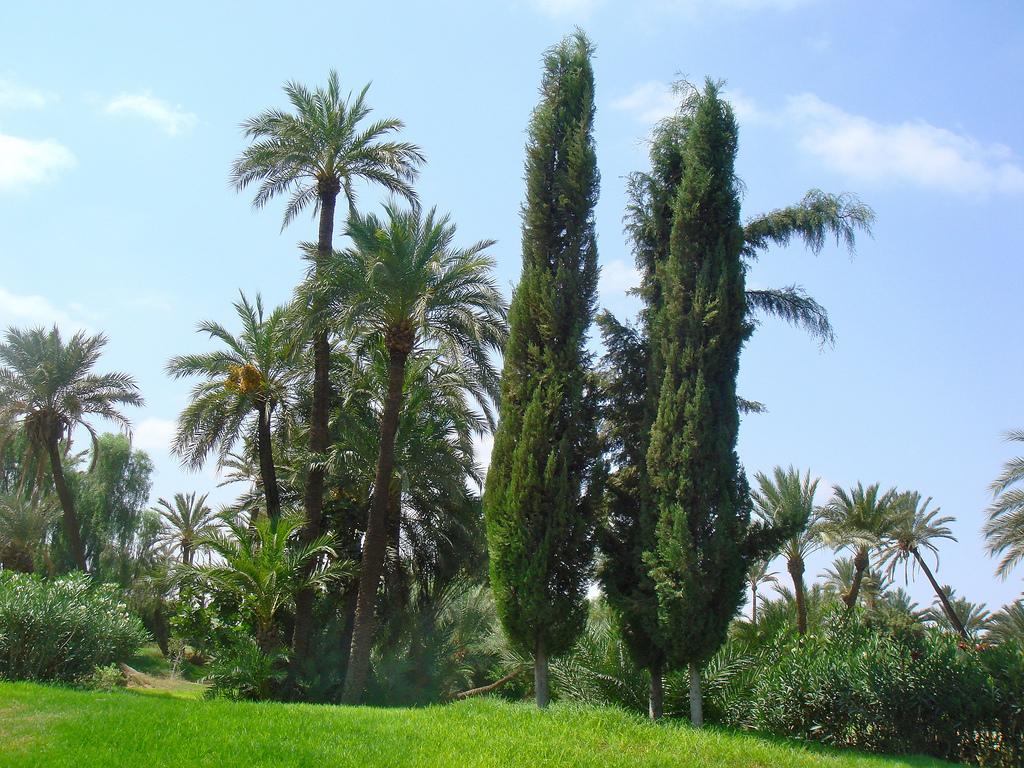 Les arbres à planter en septembre