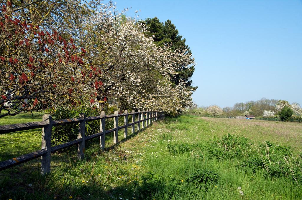 Les arbres à planter au printemps
