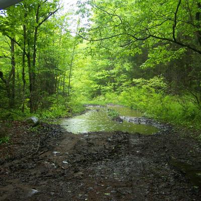 Les arbres pour terrain humide