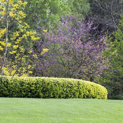 Les arbustes à tailler en avril
