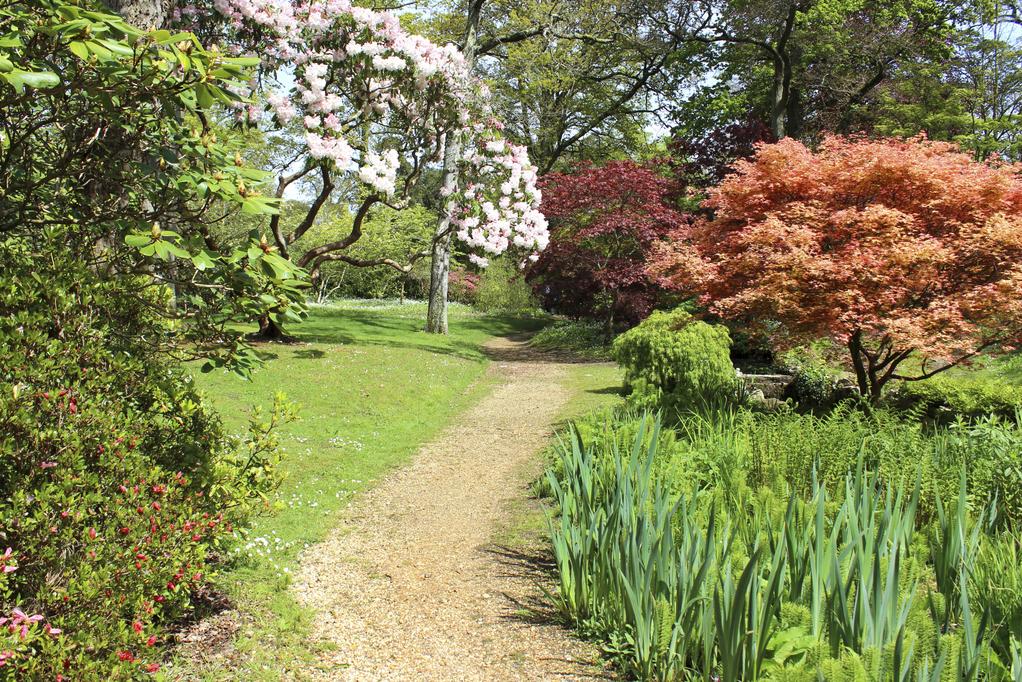 Quels arbustes planter en avril - Que planter en avril ...