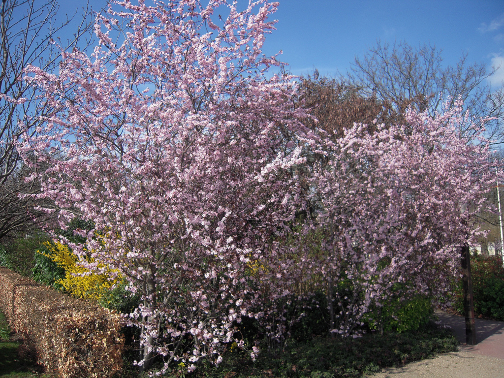 Arbuste à planter au printemps : liste - Ooreka