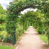 Installer une arche fleurie - Aménagement de jardin