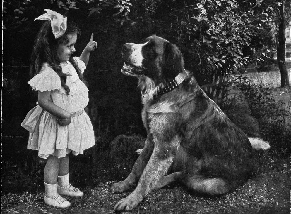 Relation entre un chien et un bébé