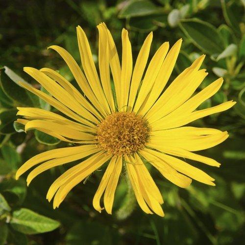 Fleurs Vivaces D Ete Liste Ooreka