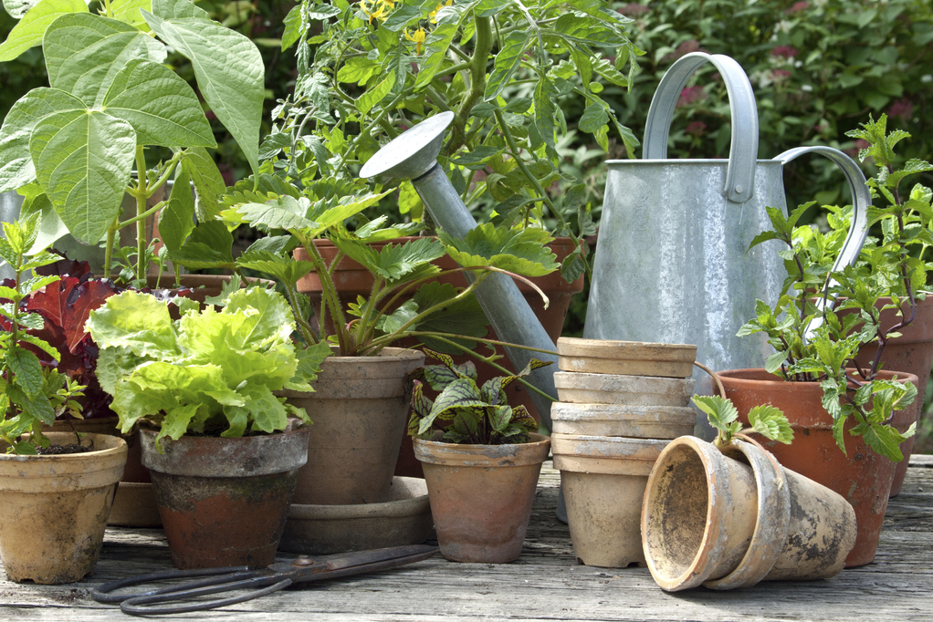 Plantes aromatiques planter en juin liste ooreka - Planter herbes aromatiques en pot ...