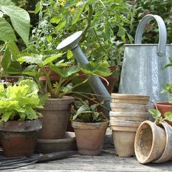 Faire une jardini re jardinage - Quel legume planter en juin ...