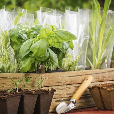 Les plantes aromatiques à planter en avril