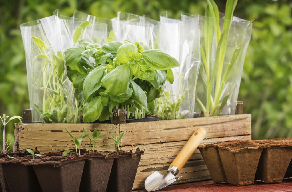 Quelles plantes aromatiques planter en avril - Que planter en avril ...