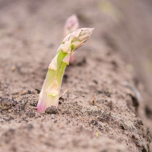 Travaux de jardinage en octobre ooreka - Que planter en octobre au potager ...