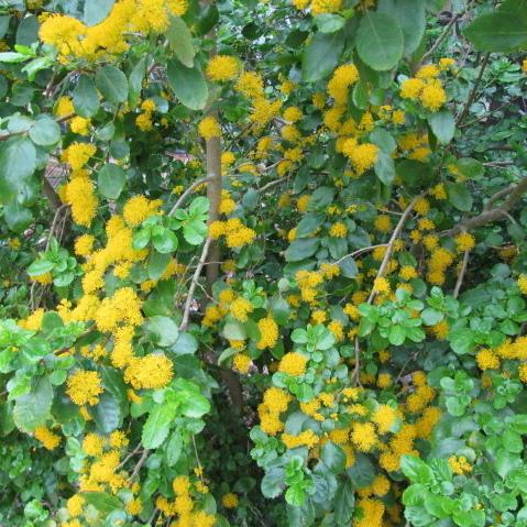 Arbuste A Floraison Hivernale Liste Ooreka