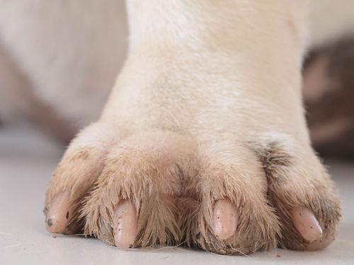 Bain pour chien : fréquence - Ooreka