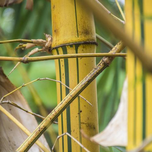 Plante à rhizome : définition et liste - Ooreka