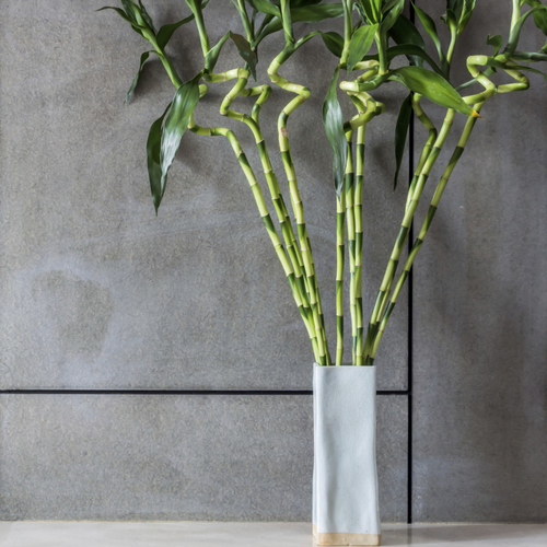 plante vivace feuillage persistant liste ooreka. Black Bedroom Furniture Sets. Home Design Ideas