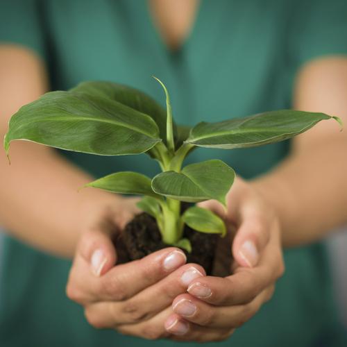 Plante verte d\'intérieur : liste - Ooreka