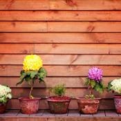 comment fabriquer des pots de fleur ooreka. Black Bedroom Furniture Sets. Home Design Ideas