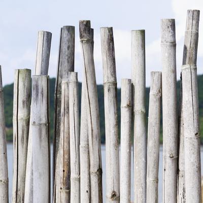 Cloture En Bambou Ooreka