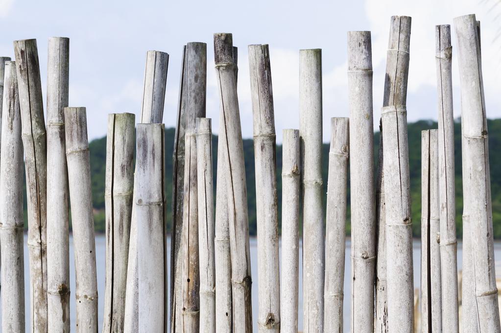 Clôture en bambou : spécificités et prix - Ooreka