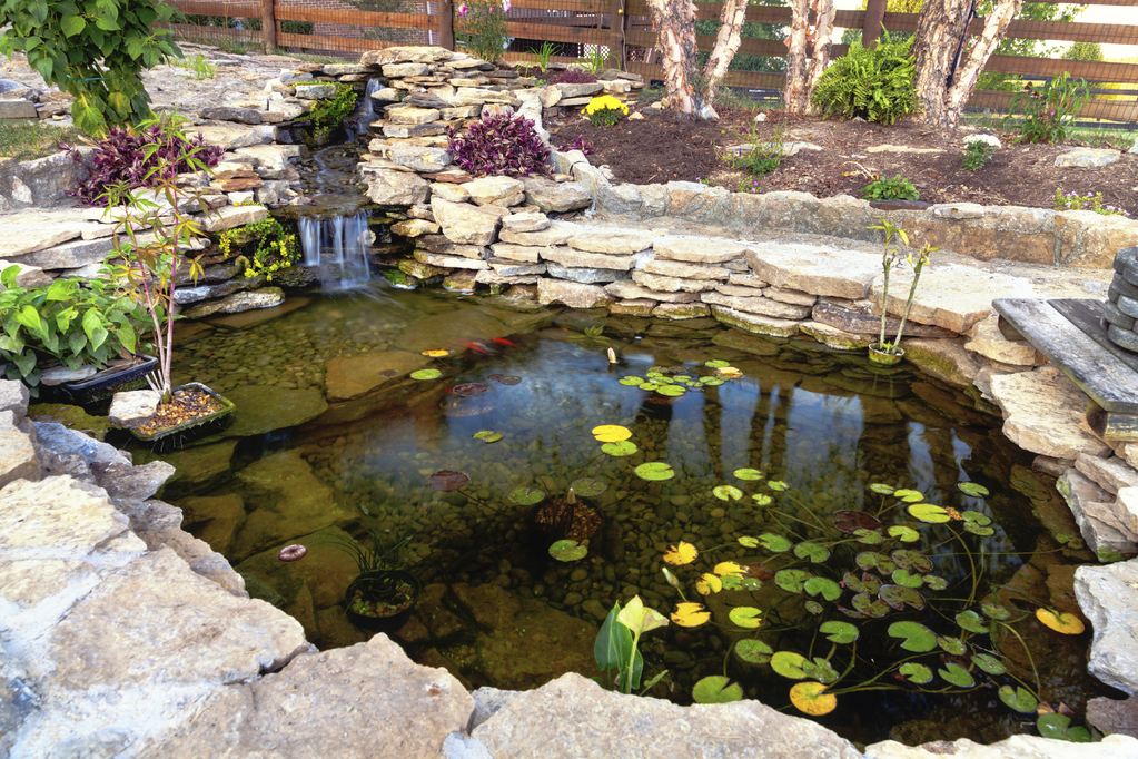Modele De Bassin De Jardin #5: Bassin De Jardin Pas Cher
