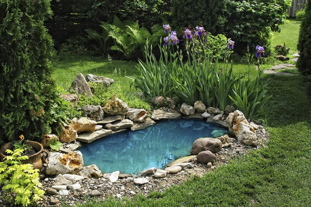 Bassin d\'ornement : bien choisir son bassin ornemental - Ooreka