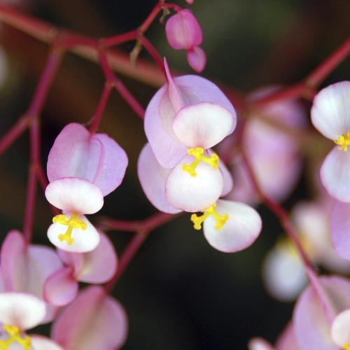 Plante vivace d 39 ombre liste ooreka for Plantes qui poussent a l ombre