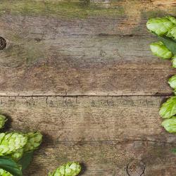 Bienfaits du houblon