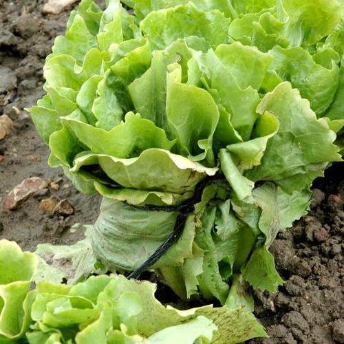Blanchir les l gumes du potager potager for Blanchir legumes pour congeler