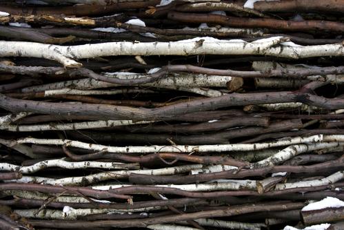 Des branches d'arbres