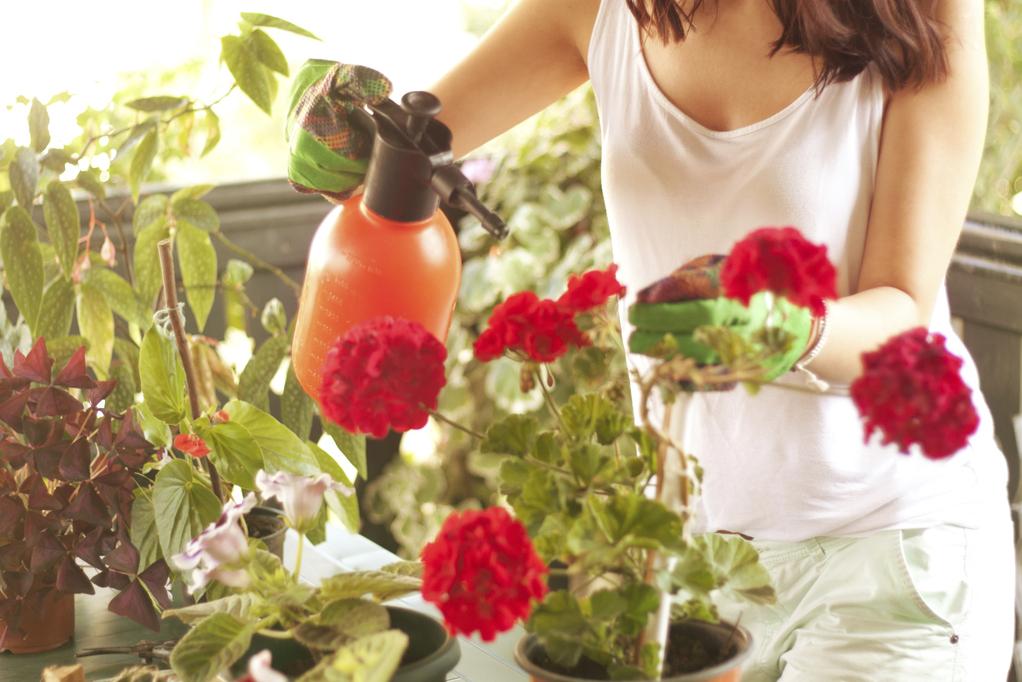 Brumisation de ses plantes d'intérieur