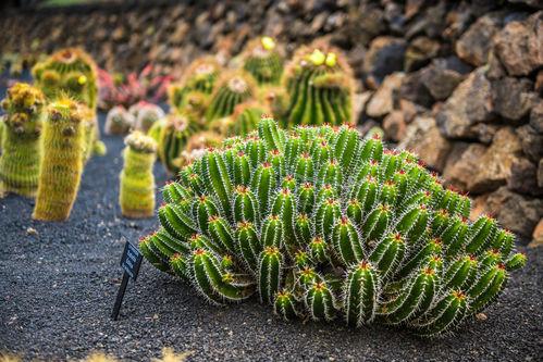 Cactus En Exterieur Ooreka
